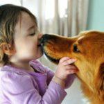 Как бороться с паразитами у домашних животных
