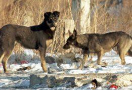 собаки загрызли бойца АТО