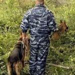 Шокирующая находка: под Харьковом обнаружили обезглавленный труп