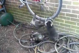 выбить признание в краже велосипеда